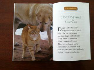 Dogandcat